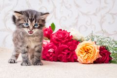 Little playful kitten near a bouquet of flowers. Happy birthday_. Little playful kitten near a bouquet of flowers. Happy birthday Royalty Free Stock Photos