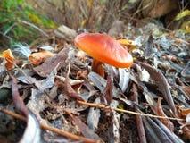 little plocka svamp fotografering för bildbyråer
