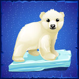 Little polar bear on an ice floe. Blue background royalty free illustration