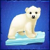 Little polar bear on an ice floe Royalty Free Stock Photo