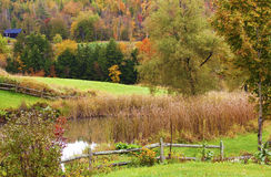 Little Pond Amid Bright Fall Colors. A little garden pond near a brightly colored autumn forest in Vermont Royalty Free Stock Images