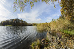Little pond and autumn forest. Little pond with stump and autumn forest Royalty Free Stock Photo