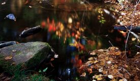 A little pond full of fall color Stock Photos
