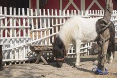Little pony in farm. Stock Photos