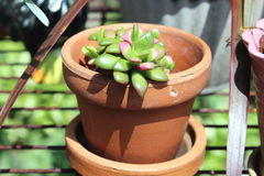 Little Pot Stock Photography