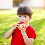 Little preschooler boy eat apple, Royalty Free Stock Photo