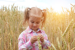 Little preschooler girl happily in wheat field on warm and sunn stock image