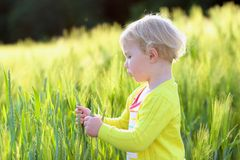 Little preschooler girl plays in wheat field Royalty Free Stock Photography