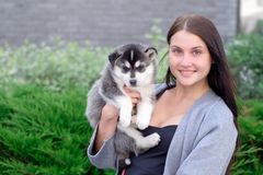 Little pretty husky puppy outdoor in womans hands royalty free stock images