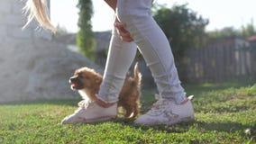 Little pretty puppy running around, playing in the summer park.