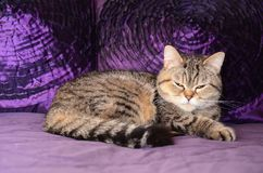 The little princess ,Susi Q. The little princess Susi Q on purple background, not manipulated royalty free stock photography
