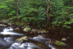Little Prong River. Great Smoky Mountains and Little River in spring royalty free stock photo