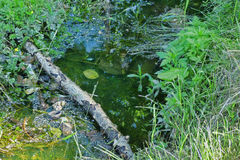 Little puddle with dark water among grass and leaves. Soft focus Stock Photos