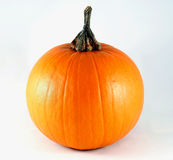Little Pumpkin Isolated Stock Photography