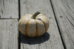 Little Pumpkin. Seasonal decoration setup outside for celebration royalty free stock images