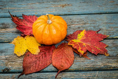 Little Pumpkin Royalty Free Stock Photography