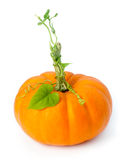 Little pumpkin Royalty Free Stock Photos