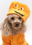little pumpkinhead Arkivbild