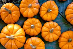 Little Pumpkins royalty free stock photo