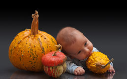 Little pumpkins Stock Image