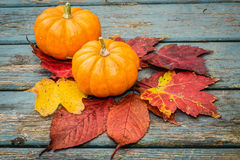 Little Pumpkins Stock Photos