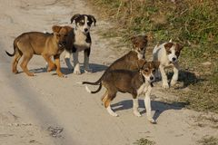 Flock of little puppies on the road on the street Stock Images