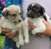 Little puppies Stock Photo