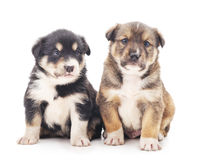 Little puppies. Royalty Free Stock Image