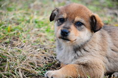 Little puppy Stock Images