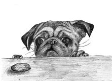 Little puppy of breed pug stock illustration