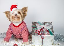 Little puppy celebrates new year royalty free stock photography