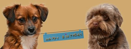 Little puppy dogs with birthday greetings. Two little puppy dogs with big eyes looking attentively into the camera, holding banner with happy birthday greetings stock photos