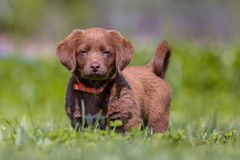 Little puppy in the garden Stock Photography