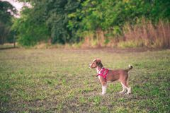 A little puppy in a grass if trees in the background stock image