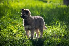 Little puppy on the grass in the sun pets nature. Little puppy on the grass in the sun pets Stock Image