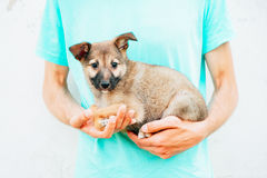 Little puppy on hands royalty free stock image