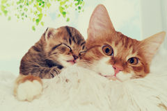 Little puppy and kitten Royalty Free Stock Image
