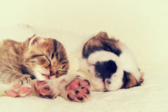 Little puppy and kitten Royalty Free Stock Photo