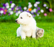 Little puppy and kitten sitting on summer grass Royalty Free Stock Photos