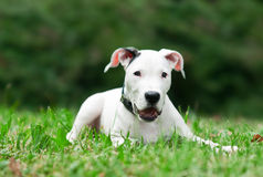 Little puppy outside Royalty Free Stock Photos