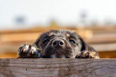 Little puppy over a wooden fence. Homeless dog. Little puppy over a wooden fence, stray dog stock image