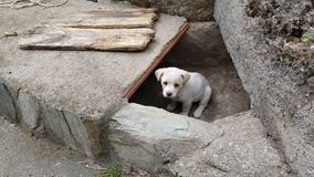 The little puppy ovserva from its hole Stock Photos