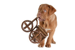 Little puppy playing Stock Image
