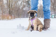 Little puppy in the snow royalty free stock photo