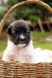 Little puppy resting in basket Stock Photos