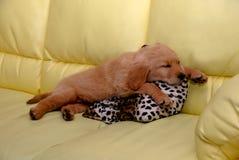Little puppy sleeping Stock Photos
