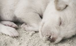 The little puppy sleeps. On the sandy beach stock images