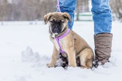 Little puppy in the snow. The little puppy is playing in the snow stock photos