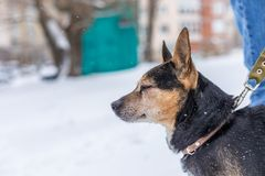 Little puppy in the snow royalty free stock photography
