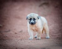 Little puppy is walking along the road royalty free stock photos